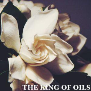 king-of-oils-jasmine