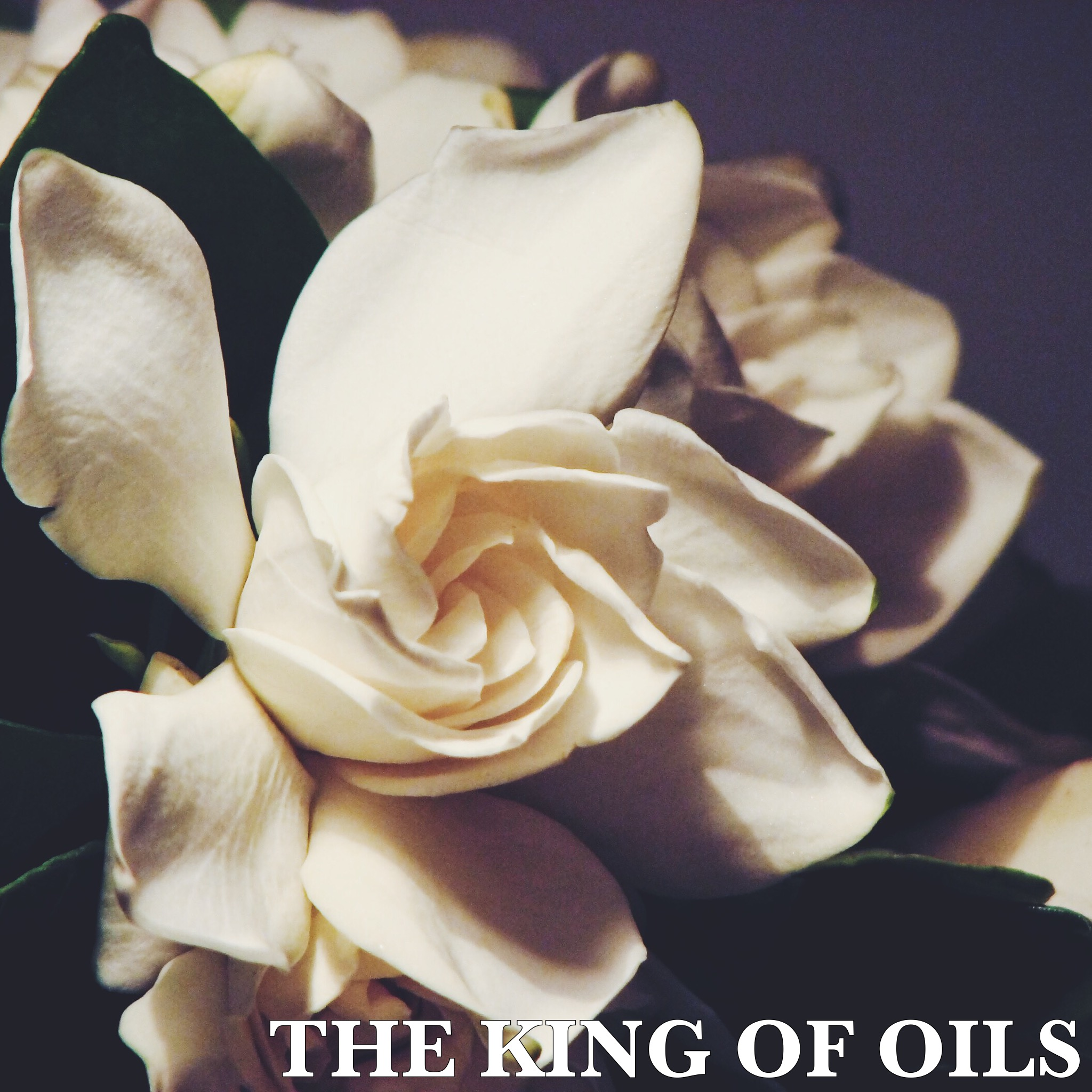 king-of-oils-jasmine