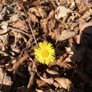 spring_in_asheville1
